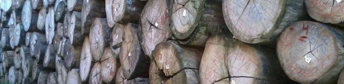 Empreendimentos, floresta e madeira