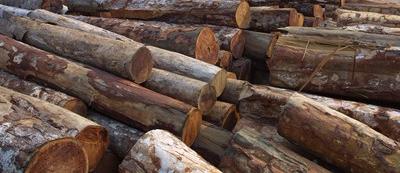 Os procedimentos para o uso de madeira de espécies ameaçadas de extinção devem ser estabelecidos pelo órgão ambiental responsável pelaASV