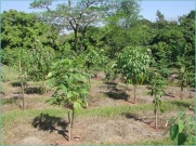 árvores-plantadas-1