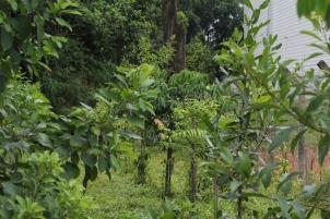 árvores-plantadas