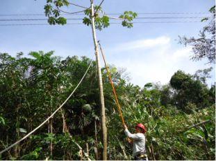 Utilização de ferramentas isolantes para corte de árvores
