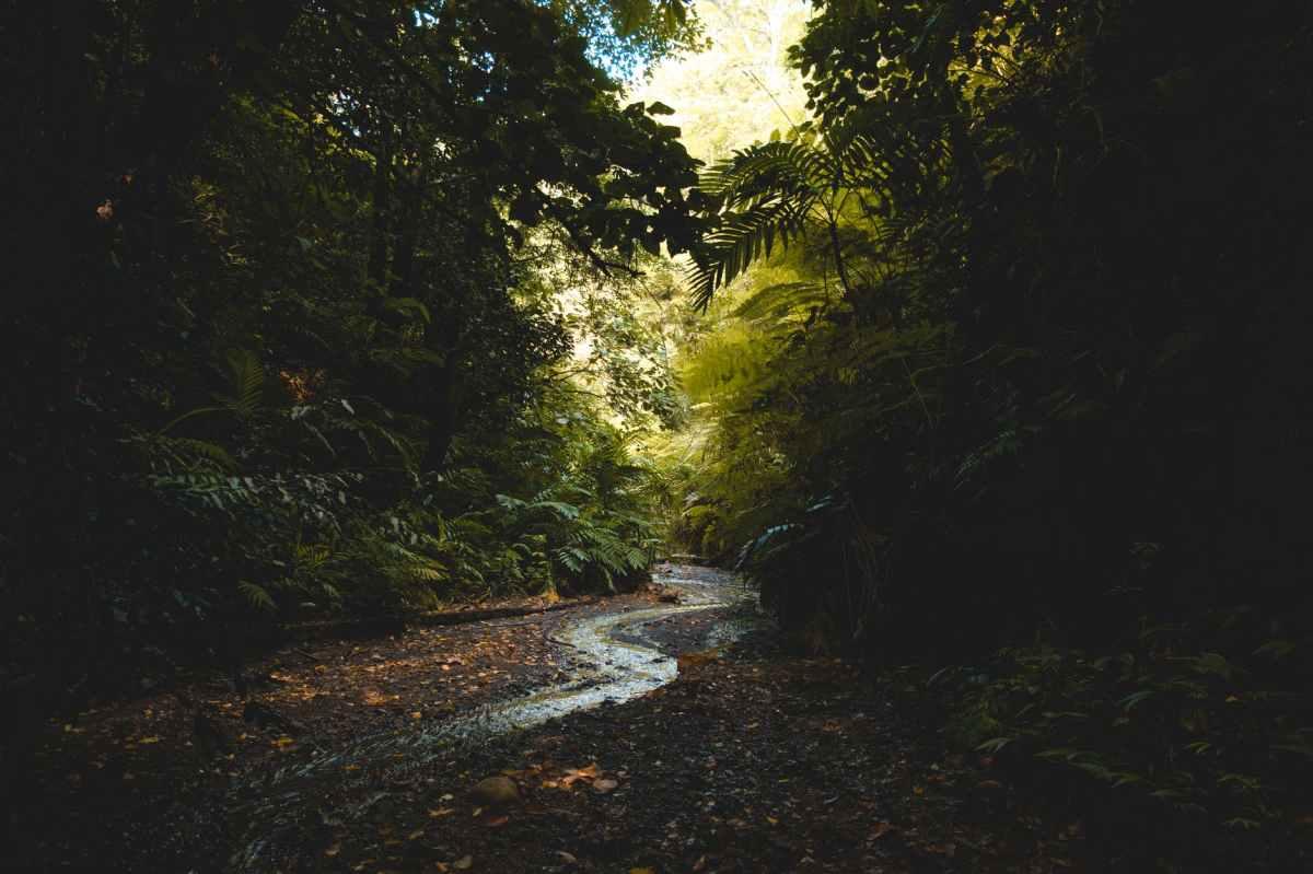 A evolução da legislação ambiental sobre compensação ambiental e a solução da lacuna que impedia a execuçãoindireta