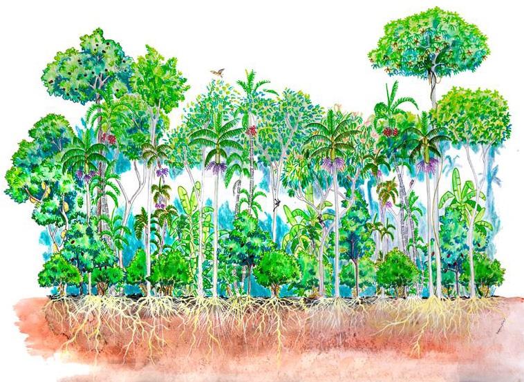 Uso de Sistemas Agroflorestais na Recomposição de Vegetação em Áreas de PreservaçãoPermanente